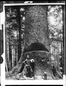 Lumberjack Syndrome