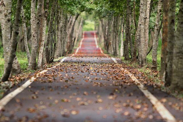 Road to belgium road